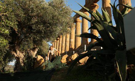 L'olio della Valle dei Templi: l'extravergine sulla Via Sacra