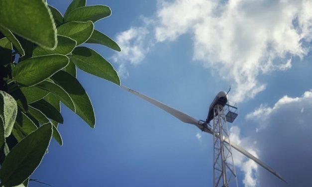 Sostenibilità ambientale nella filiera agroalimentare dell'olio