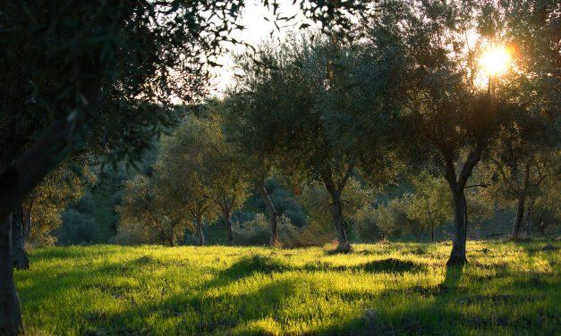 Italian Storytelling Brand & District
